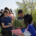 Planting pines with elementary school students